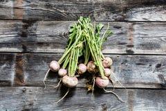 Manojo de nabos orgánicos con la suciedad y las raíces, el cultivar un huerto auténtico Foto de archivo