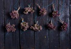 Manojo de orégano seco Fotografía de archivo libre de regalías