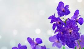 Manojo de orquídeas azules Fotos de archivo libres de regalías