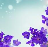 Manojo de orquídeas azules Foto de archivo