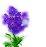 Manojo de orquídeas azules Imágenes de archivo libres de regalías