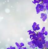 Manojo de orquídeas azules Imagenes de archivo