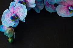 Manojo de orquídeas violetas Imagenes de archivo
