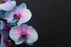 Manojo de orquídeas violetas Foto de archivo libre de regalías