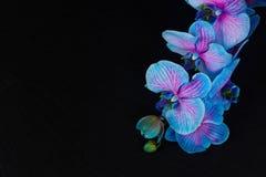 Manojo de orquídeas violetas Fotos de archivo libres de regalías