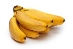 Manojo de pequeños plátanos aislados en blanco Fotografía de archivo libre de regalías