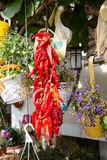 Manojo de pimientas de chile rojo Foto de archivo libre de regalías