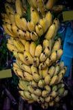 Manojo de plátano Imágenes de archivo libres de regalías