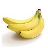 Manojo de plátanos ilustración del vector