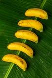 Manojo de plátanos frescos en las hojas del plátano, visión superior, comp verticales imagen de archivo libre de regalías