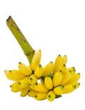 Manojo de plátanos maduros aislados en la trayectoria de recortes blanca del fondo Imagen de archivo libre de regalías