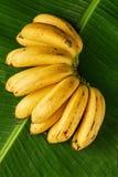 Manojo de plátanos maduros amarillos frescos en las hojas del plátano, composición vertical, visión superior foto de archivo libre de regalías