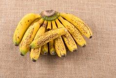 Manojo de plátanos pecosos amarillos Imagen de archivo libre de regalías