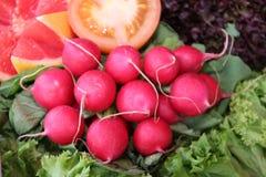 Manojo de rábanos rojos imagen de archivo libre de regalías