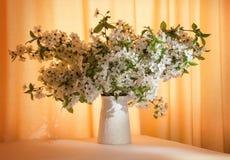 Manojo de ramas del florecimiento en florero Fotografía de archivo libre de regalías