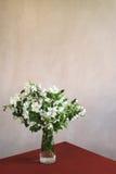 Manojo de ramitas florecientes del manzano foto de archivo libre de regalías