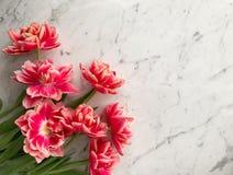 Manojo de rosa fresca y de tulipanes rosados de la peonía de Países Bajos en el fondo tablero de mármol blanco y gris, visión sup imágenes de archivo libres de regalías