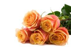 Manojo de rosas fotografía de archivo libre de regalías