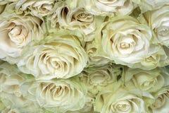 Manojo de rosas blancas Imagenes de archivo