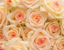 Manojo de rosas de marfil con el centro rosado fotografía de archivo libre de regalías