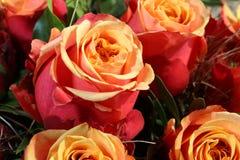Manojo de rosas del brandy de la cereza Fotografía de archivo