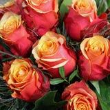 Manojo de rosas del brandy de la cereza Fotografía de archivo libre de regalías