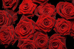 Manojo de rosas rojas Foto de archivo