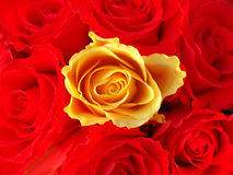 Manojo de rosas rojas con un solo amarillo uno fotografía de archivo libre de regalías