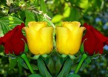 Manojo de rosas rojas y amarillas imagen de archivo