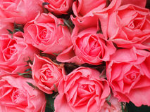 Manojo de rosas rosadas foto de archivo libre de regalías
