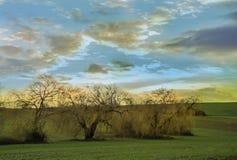 Manojo de sauces en la puesta del sol con el cielo nublado imágenes de archivo libres de regalías