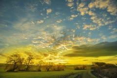 Manojo de sauces en la puesta del sol con el cielo nublado fotografía de archivo libre de regalías