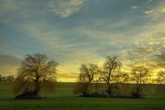 Manojo de sauces en la puesta del sol con el cielo nublado fotografía de archivo