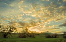 Manojo de sauces en la puesta del sol con el cielo nublado foto de archivo libre de regalías