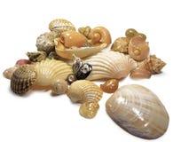 Manojo de shelles del mar Foto de archivo libre de regalías