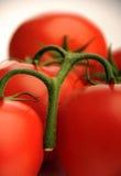 Manojo de tomates Foto de archivo libre de regalías