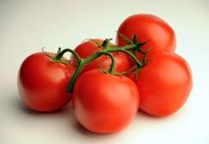 Manojo de tomates Fotografía de archivo