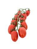 Manojo de tomates Imagenes de archivo