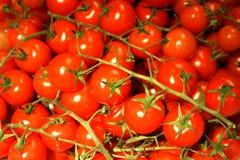 Manojo de tomates de cereza Fotos de archivo