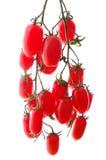 Manojo de tomates de cereza aislados imagen de archivo libre de regalías