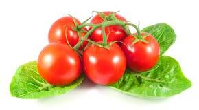 Manojo de tomates frescos con las hojas de la ensalada Foto de archivo