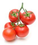 Manojo de tomates frescos en el fondo blanco Foto de archivo libre de regalías