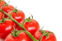 Manojo de tomates orgánicos frescos aislados en el fondo blanco Imágenes de archivo libres de regalías