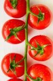 Manojo de tomates orgánicos frescos en el fondo blanco Imagen de archivo libre de regalías