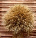 Manojo de trigo Foto de archivo libre de regalías