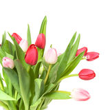 Manojo de tulipanes aislados en blanco Fotos de archivo