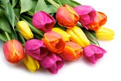Manojo de tulipanes aislados en blanco Imágenes de archivo libres de regalías