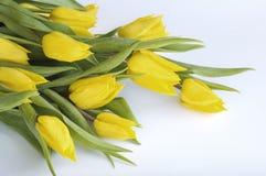 Manojo de tulipanes amarillos Imágenes de archivo libres de regalías