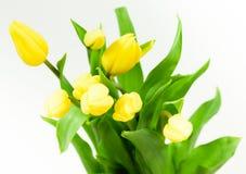 Manojo de tulipanes amarillos Fotografía de archivo
