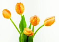 Manojo de tulipanes anaranjados Imágenes de archivo libres de regalías